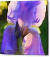 Purple Iris Canvas Print