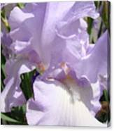 Purple Irises Artwork Lavender Iris Flowers 13 Botanical Floral Art Baslee Troutman Canvas Print
