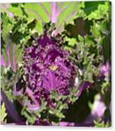 Purple Kale Canvas Print