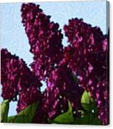 Purple Lilac 3 Canvas Print