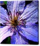 Purple Lilly Canvas Print