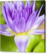 Purple Lotus Blossom Canvas Print