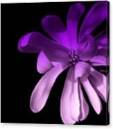 Purple Magnolia 2 Canvas Print