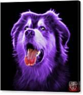 Purple Malamute Dog Art - 6536 - Bb Canvas Print