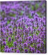 Purple Meadow 3 Canvas Print