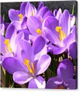 Purple Morning Canvas Print