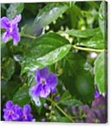 Purple On Green With Raindrops Canvas Print