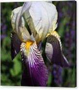 Purple On Purple Iris Canvas Print