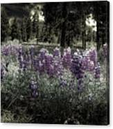 Purple On The Forest Floor Canvas Print
