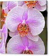 Purple Orchid 1 Canvas Print