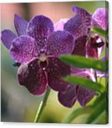 Purple Orchid Beauty Canvas Print