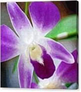 Purple Orchid Canvas Print