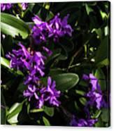 Purple Orchid Plant Canvas Print
