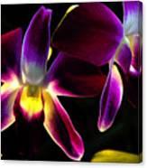Purple Orchids 2 Backlit Canvas Print