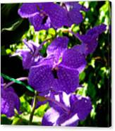 Purple Orchids Canvas Print
