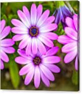 Purple Pals Canvas Print