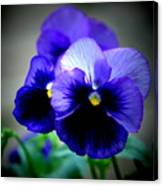 Purple Pansy - 8x10 Canvas Print