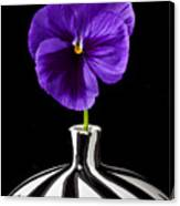 Purple Pansy Canvas Print