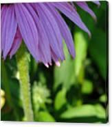 Purple Petals Canvas Print