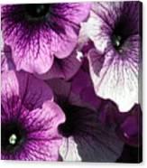 Purple Petunia Paradise Canvas Print