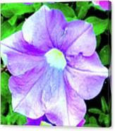 Purple Petunias 2 Canvas Print