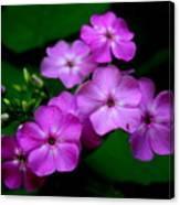 Purple Phlox By Earl's Photography Canvas Print