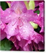 Purple Pink Horizontal Canvas Print
