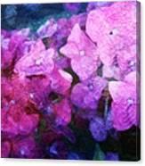 Purple Pink Painterliness Canvas Print