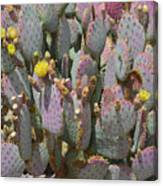 Purple Prickly Pear 1 Canvas Print