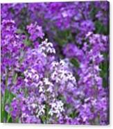 Purple Profusion Canvas Print