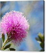 Purple Puff Canvas Print