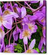 Purple Rain Lilies Canvas Print