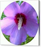 Purple Rose Of Sharon In Circle Frame Canvas Print