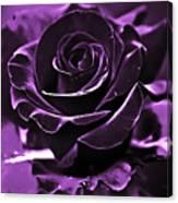 Purple Seduction Canvas Print