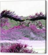 Purple Sensation Canvas Print