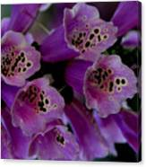 Purple Silk Canvas Print