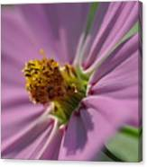 Purple Soft Petals Canvas Print