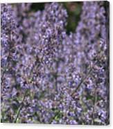 Purple Spikes Flora Impression 6.8.17  Canvas Print