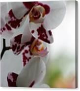 Purple Splash Orchid 1 Canvas Print