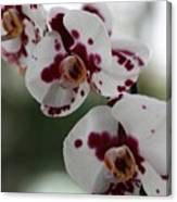 Purple Splash Orchid 2 Canvas Print