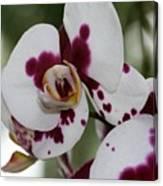 Purple Splash Orchid 3 Canvas Print