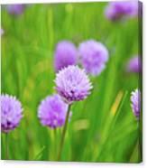 Purple Spring 14 Canvas Print