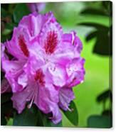 Purple Spring 15 Canvas Print