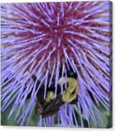 Purple Star Burst Canvas Print