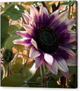 Purple Sunflower Abstract Canvas Print