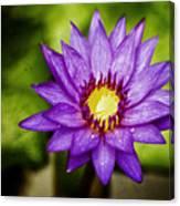 Purple Sunrise Canvas Print