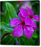 Purple Teardrop Canvas Print