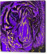 Purple Tiger Canvas Print