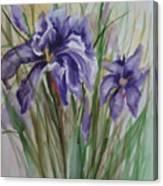 Purple Times 3 Canvas Print