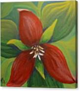 Purple Trillium Canvas Print
